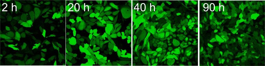 Fuse-It-N-mRNA-sample-CHO
